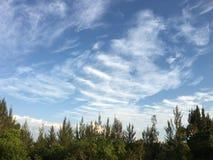 Облака о деревьях Стоковая Фотография