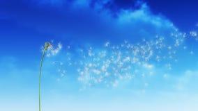 Облака одуванчика сток-видео