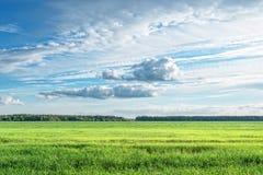 Облака поля Стоковая Фотография