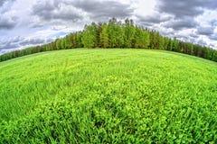 Облака поля Стоковое фото RF