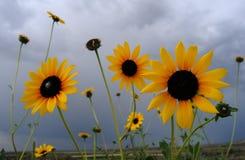 Облака солнцецветов стоковые фотографии rf