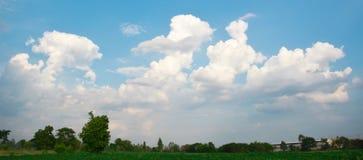 Облака луга и голубых небес Стоковые Изображения