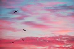 Облака цирруса на зоре Птицы утра Стоковые Изображения RF