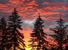 Облака шторма лета Стоковое Фото