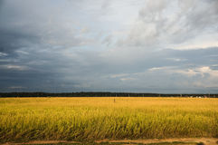 облака field сверх стоковое фото