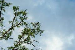 облако высокое Стоковое Фото