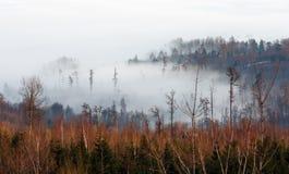 Облако нижнего яруса вставленное в верхних частях деревьев Стоковая Фотография