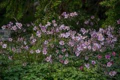 Облако фиолетовых флагов Стоковая Фотография