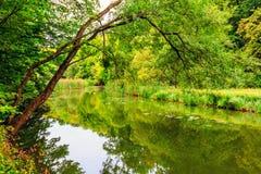 область Украина озера kyiv осени Стоковое Фото