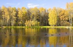 область Украина озера kyiv осени Стоковая Фотография RF