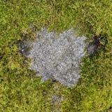 Облыселое пятно в форме сердца Стоковая Фотография