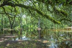 Облыселые деревья отражая в воде стоковое изображение rf