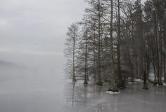 Облыселый край леса кипарисов в льде и тумане стоковые изображения rf