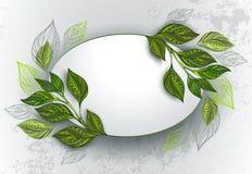 Овальное знамя с листьями чая Стоковые Изображения