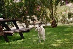 овечка немногая Стоковое фото RF