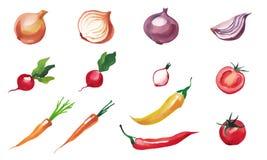 Овощи акварели изолированные на белой предпосылке установите овощи Стоковая Фотография