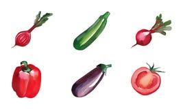 Овощи акварели изолированные на белой предпосылке установите овощи Стоковое фото RF