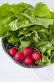 Овощи весны стоковые фотографии rf