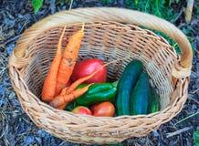 Овощи внутри корзины wicker Стоковая Фотография