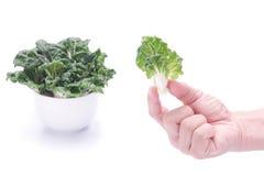 Овощи выбранные рукой Стоковое фото RF