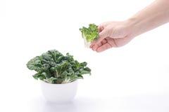 Овощи выбранные рукой Стоковые Изображения RF