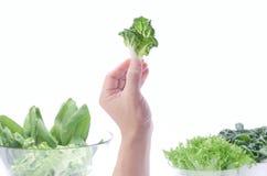 Овощи выбранные рукой Стоковое Фото