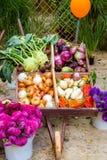 Овощи в коробке Стоковое Изображение