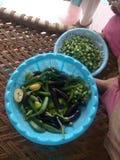 Овощи в доме сельского хозяйства Стоковое Изображение