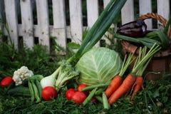 Овощи в сборе корзины Стоковые Фотографии RF