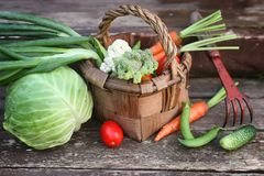 Овощи в сборе корзины Стоковые Фото