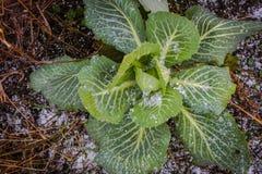 Овощи зимы стоковое изображение