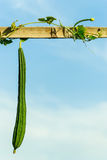 Овощи и бамбук Стоковое Фото