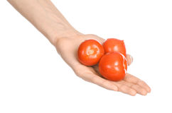 Овощи и тема варить: рука человека держа 3 красных зрелых томата изолированный на белой предпосылке в студии Стоковые Изображения
