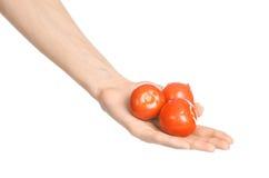 Овощи и тема варить: рука человека держа 3 красных зрелых томата изолированный на белой предпосылке в студии Стоковая Фотография