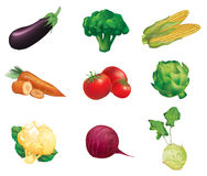 Овощи, комплект изолированных, детальных иллюстраций вектора и I Стоковое Изображение RF
