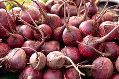 овощи корня стоковые изображения rf