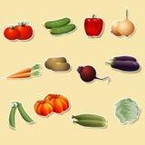 Овощи: мозоль, картошки, томаты, моркови, перцы иллюстрация вектора