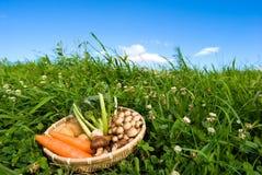 овощи осени стоковое изображение