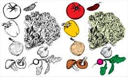 овощи руки чертежа собрания Стоковые Изображения RF
