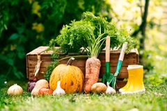 Овощи, садовые инструменты и wellies в саде Стоковые Фото