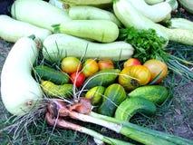 овощи сада стоковое изображение