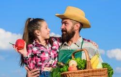 Овощи сбора корзины владением отца и дочери Садовничать и сбор Концепция фермы семьи Только органический и стоковые фотографии rf