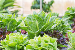 овощи свежего сада предпосылки смешанные белые стоковое изображение