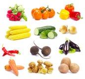 Овощи собрания стоковая фотография