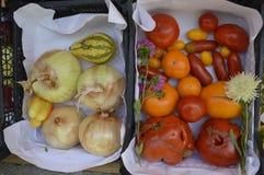 Овощи, томаты, луки Стоковое Изображение RF