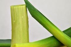 Овощи лук-порея, предусматриванные с падениями воды Porrum лукабатуна Белая предпосылка Стоковые Фотографии RF