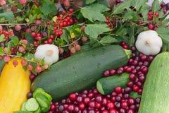 овощи урожая ягод Стоковая Фотография