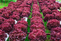 Овощи Oganic стоковое фото