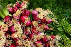 овощи salamanca свежего рынка Стоковое Фото