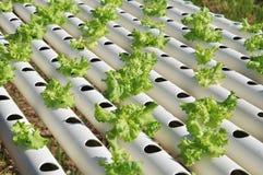 Овощ гидропоники стоковое фото rf